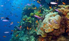 Shutterstock_Debra_James_WWF_Aus_349525